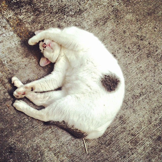 lazy cat is lazy..