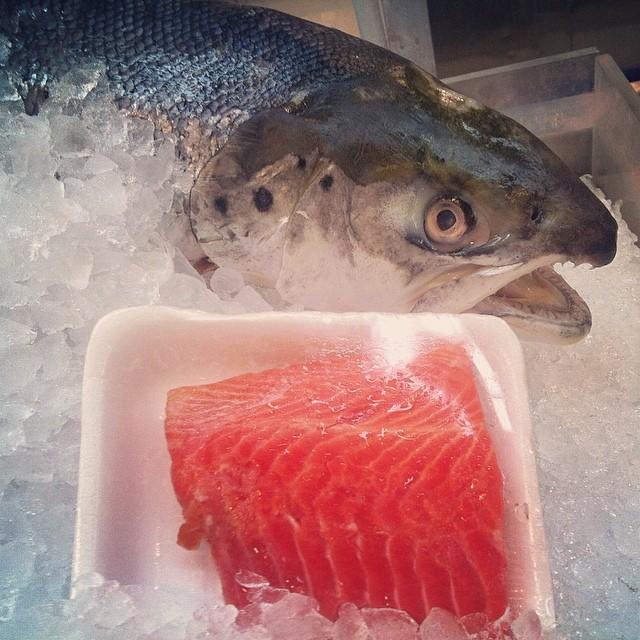 holy fish! wat??!!