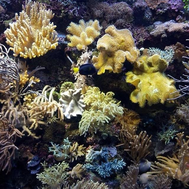 those reefs..