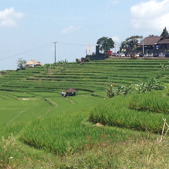 The other type of terrace #Bali #Rice