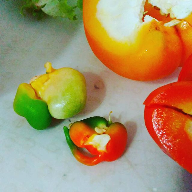 Curious little thing frm the capsicum ;)