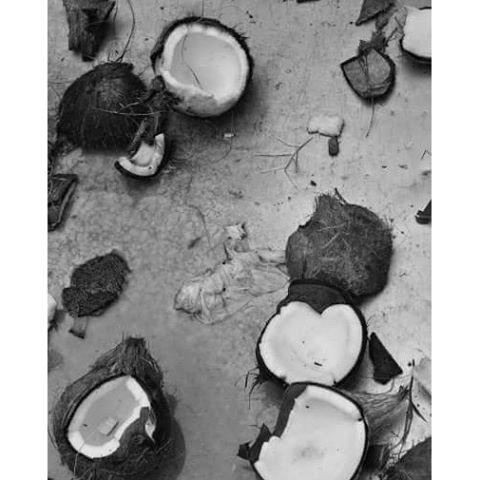 #coconuts