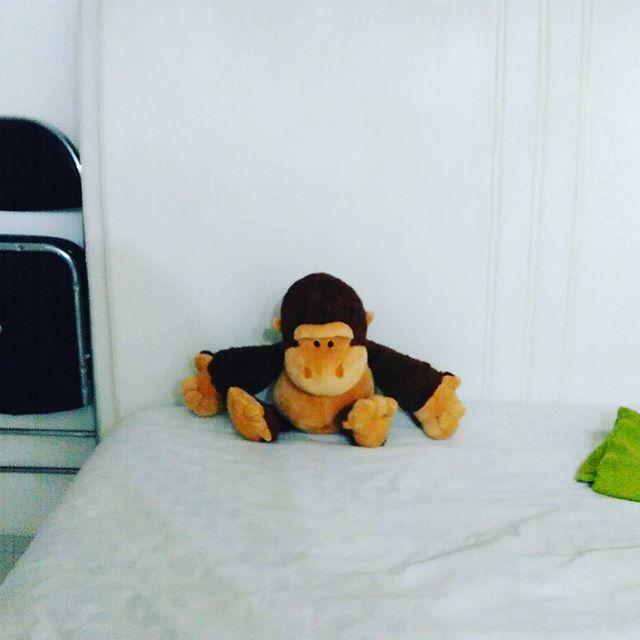 猴子向您请安。
